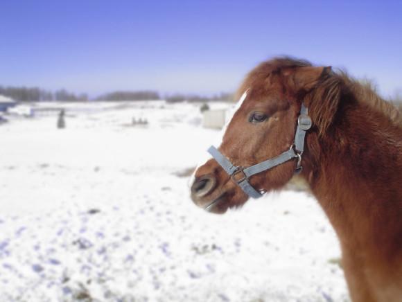 pony-giftig
